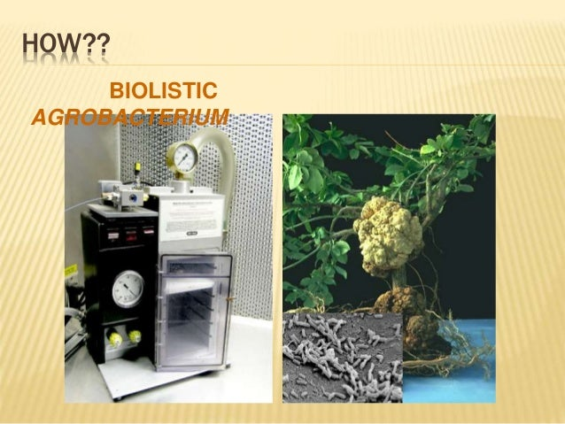 application of transgenic plants and animals